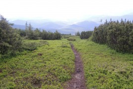 Тропа на спуске с Гропы
